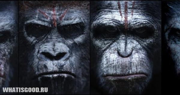 planeta obezyan kak civilizovannyj mir smotrit na ostalnyx 2 Планета обезьян: Как цивилизованный мир смотрит на остальных
