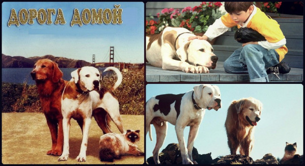 filmy-doroga-domoj-12-1993-1996-put-k-domu-cherez-samorazvitie-001 Дорога домой - 2. Затерянные в Сан-Франциско