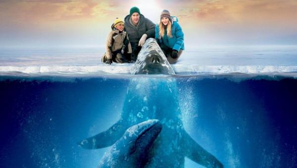 film-vse-lyubyat-kitov-2012-realistichnyiy-primer-chuda (1)