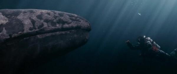 film vse lyubyat kitov 2012 realistichnyiy primer chuda 6 Фильм «Все любят китов» (2012): Реалистичный пример чуда