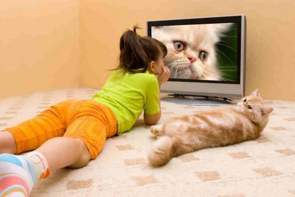 sovremennoe televidenie troyanskij kon u vas doma1 1 Трезвый взгляд на современное телевидение