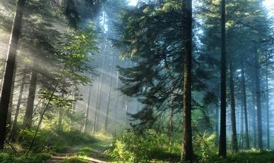 Aleko 12 Алеко: Бессмертие корней (стихи)