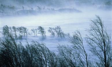 Aleko 26 Алеко: Бессмертие корней (стихи)