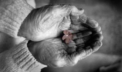 Aleko 36 Алеко: Бессмертие корней (стихи)