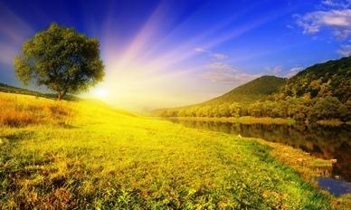Aleko 49 Алеко: Бессмертие корней (стихи)