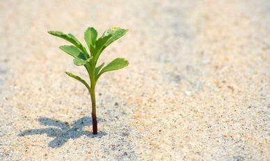 Aleko 57 Алеко: Бессмертие корней (стихи)