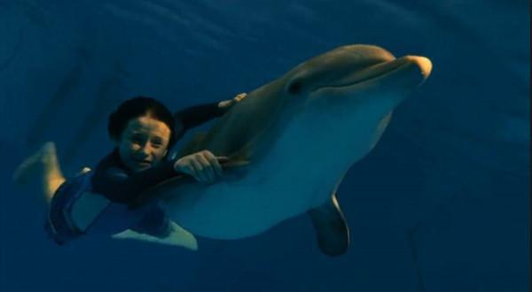 film istoriya delfina 2011 primer otnoshenij k okruzhayushhim lyudyam i zhivotnym 4 Фильм «История дельфина» (2011): Пример отношений к окружающим людям и животным