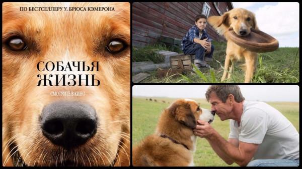 film-sobachya-zhizn-2017-reinkarnatsiya-s-izyuminkoy (1)